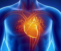 heart xray image